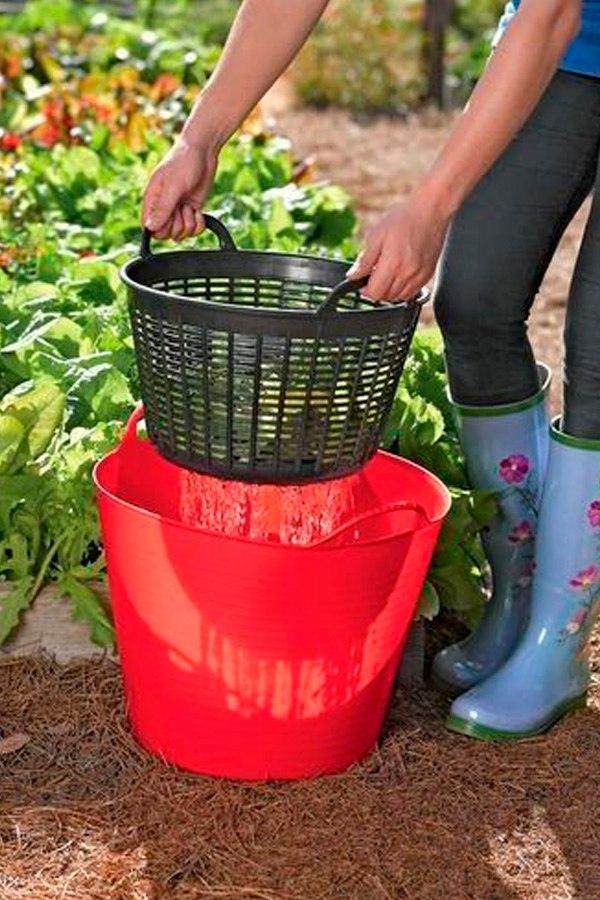 Как промывать землю в горшке с рассадой