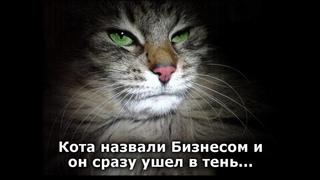 Веселые картинки. Приколы про кошек и котов. Смешные кошки.