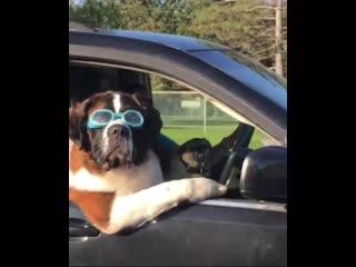 Самый крутой собакен!😎