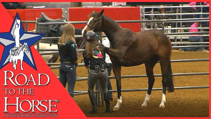 Road to the Horse 2017 Extra Footage Vicki Wilson Clinic