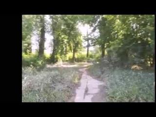 Прогулка по дикому берегу Варшавской Вислы  2   Walk along the wild bank of the Warsaw Vistula 2