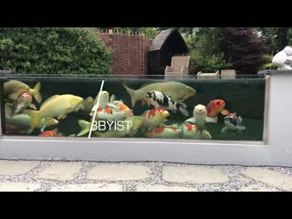 Top 3 most beautiful backyard fish ponds in the world