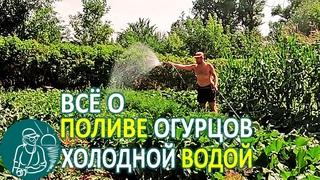 Полив огурцов в жару холодной водой 💧 Польза или вред для растений 🌿 Опыты Гордеевых