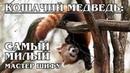 КРАСНАЯ ПАНДА Кошачий медведь и королева милоты Интересные факты про панд, медведей и животных