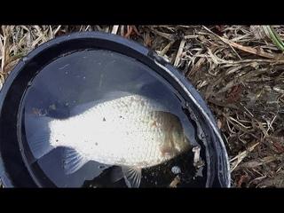 ВОТ ЭТО ЛАПТИ! КАРАСЬ ТО ПОКЛЕВЫВАЕТ. Рыбалка на поплавочную удочку!