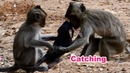 Very Pity Baby Trying Hard To Hug Kidnapper - Catching Cutest Baby Monkey - Grab Cute Baby