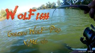 Сом 10,5 кг. На спиннербейт от компании WolFish. Процесс вываживания.