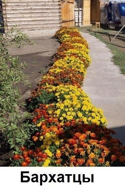 Цветы вдоль дома!