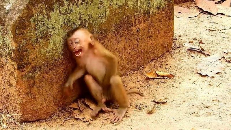Bu Videoyu Gören Herkes Ağlıyor. - İnsanlar Gibi Ağlayan Hayvanlar.