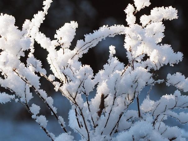 ветка снег (700x468, 103Kb)
