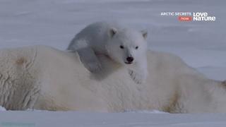 «Тайны Арктики (2). Остров Девон: Ледяная земля» (Познавательный, природа, животные, 2015)