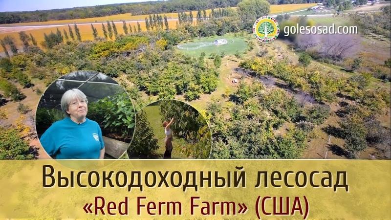 Высокодоходный лесосад RED FERN FARM США
