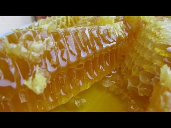 ТСН Скільки меду зібрали на українських пасіках та яких цін чекати на нього