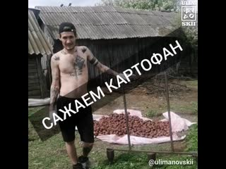 Улимановский - САЖАЕМ КАРТОФАН