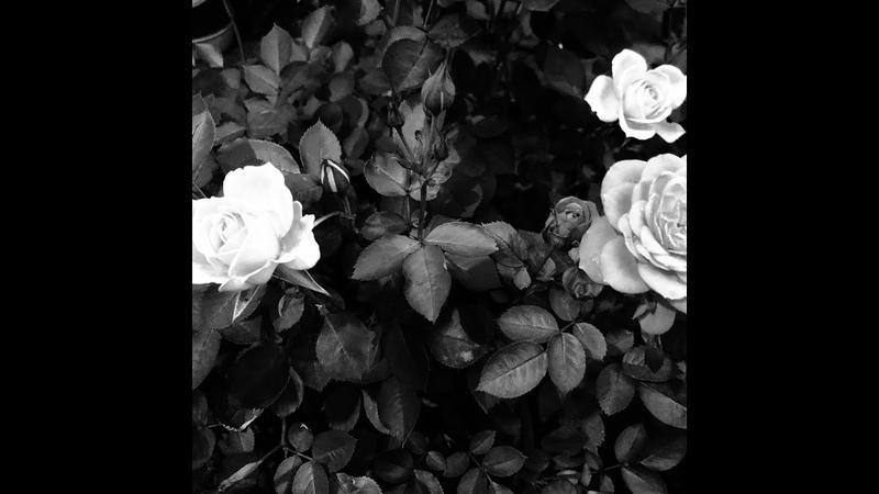 THE BLACK COMET CLUB BAND new album 'La Vie En Rose' Audio digest version ダイジェスト版