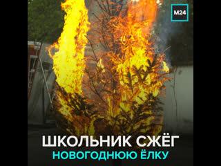 Школьник сжёг новогоднюю ёлку — Москва 24