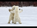 Песенка про Белых медведей С Новым годом Веселые детские песни