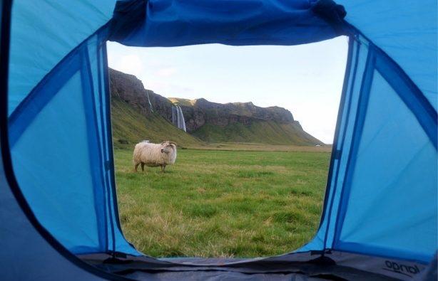 Доигрались! В Исландии ужесточили правила кемпинга, изображение №3