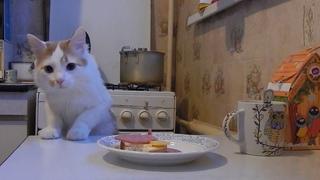 Кот, еда на столе и скрытая камера! Пройдет ли испытание?