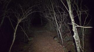 【4K】Walking at night in Aokigahara forest (no pranks, not scary. ASMR?)