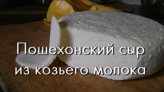 Твердый сыр дома - Пошехонский из козьего молока