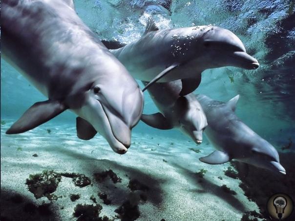 Индия признает дельфинов личностями и запрещает дельфинарии