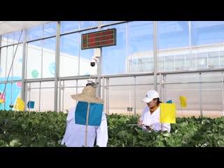 Соревнования по выращиванию клубники: ИИ против фермеров