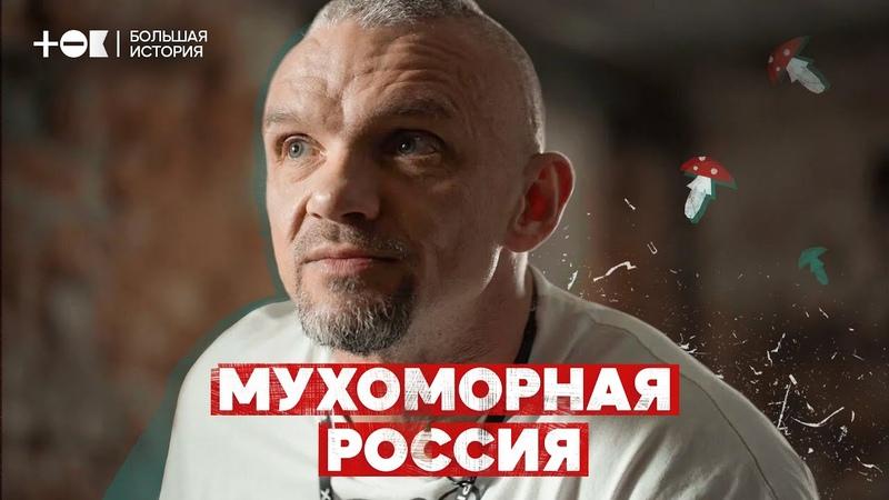 Мухоморная лихорадка Почему в России стало модно есть ядовитые грибы ТОК