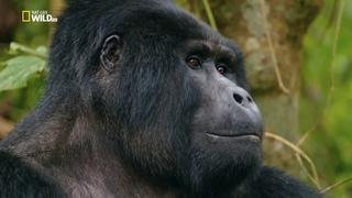 Nat Geo Wild: Дикая Уганда (1080р)