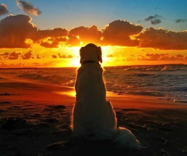 Улыбчивый пёс На пирсе у моря сидел улыбчивый пёс в солнечных очках. Его золотистую шерсть живописно причёсывал ветер. Близился закат. К собаке подъехал мужчина в коляске и сам невольно