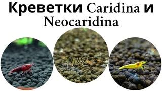 Креветочник часть 3. Аквариумные креветки каридины и неокаридины
