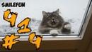 КОШКИ СМЕШНЫЕ КОТЫ 2021 ПРИКОЛЫ С КОТАМИ И КОШКАМИ 2021 Funny Cats