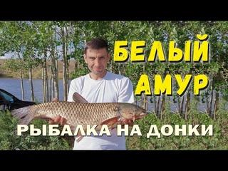 Ловля Белого Амура на донку с берега | Сталинское водохранилище
