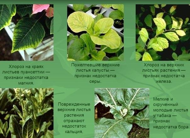 Как по внешним признакам можно определить каких минеральных веществ не хватает растениям  посаженным культурам