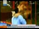 Встреча со львом после долгой разлуки
