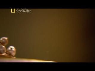 К/Ф National Geographic: Секретные материалы древности. Святой грааль. (2011)