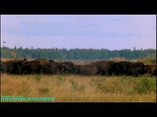 BBC Рассказы о животных 15 серия Документальный 2008
