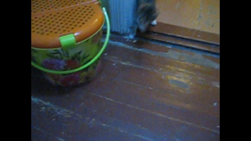 Дрессированая кошечка приносит игрушку