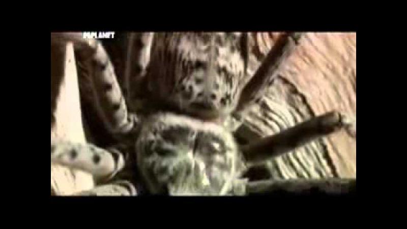 Animal Planet Войны жуков гигантов Monster bug wars