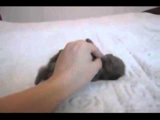 Опасно для вашего мимиметра | A tiny petting addict