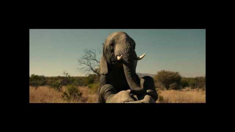 В вагине слонихи бывает нелегко