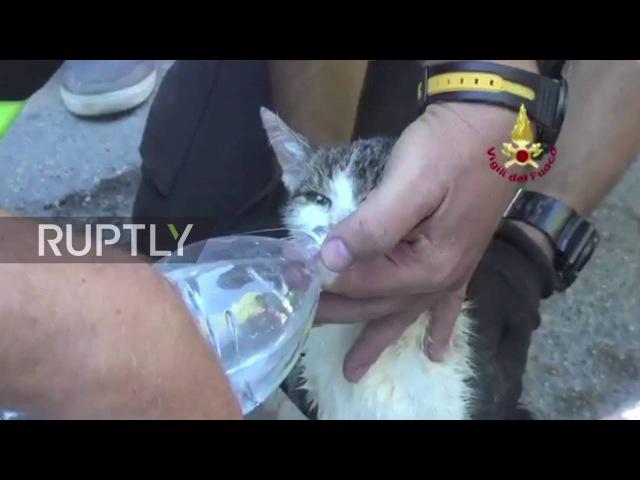 Италия Котёнок спасли в живых после шести дней спрятанных в Аматриче щебнем