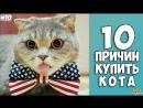 10 ПРИЧИН КУПИТЬ КОТА - Интересные факты о кошках!