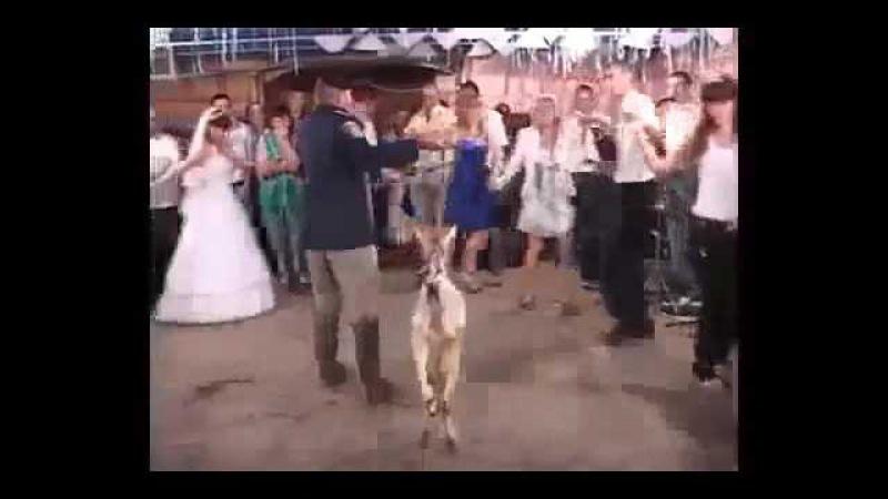 Приколы на свадьбе часть 2 самая смешная подборка 2017 Fun at wedding part 2 the funniest collectio