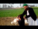 PUNJAB WASEEB WITH DEERA AND ANIMALS OF MAHAR AMIR ALI HARAL Fsd 29 12 2016