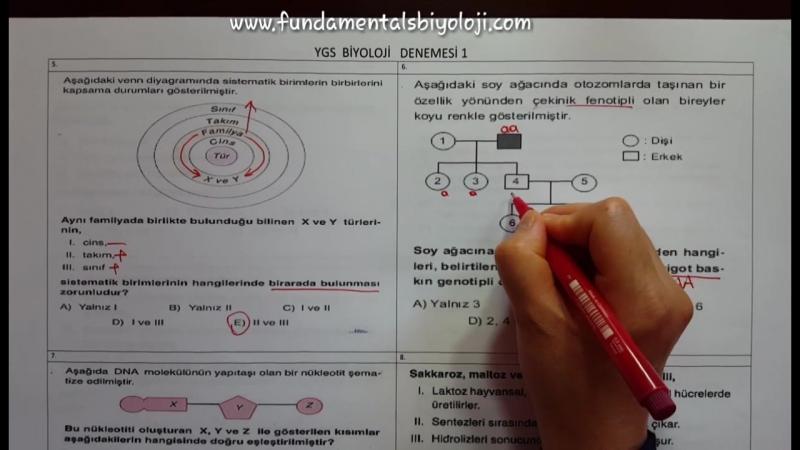 YGS Biyoloji Denemesi 1