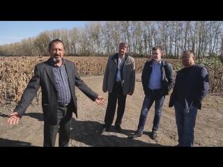 Почему выбирают гибриды подсолнечника Казахстанской селекции