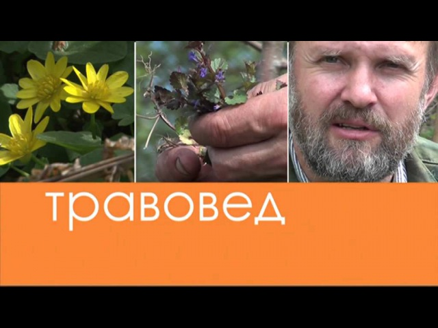 Травовед Козлятник Рассказывает Моряков Сергей Викторович