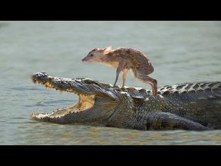 10 случаев спасения животными других животных