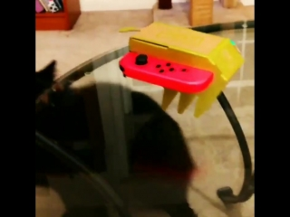 My cat does not know what to make of this RC car! NintendoLabo
